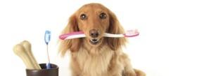 Czy psy i koty mają problemy z zębami?