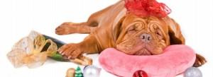 Jak pomóc psu przetrwać sylwestra?