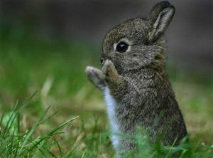 Podstawowe wiadomości o królikach.