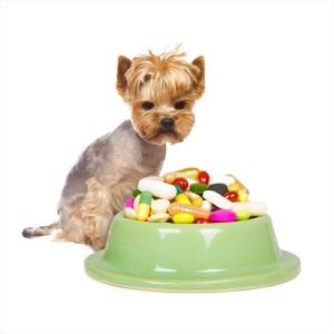 Zatrucia lekami przeciwbólowymi u psów i kotów.